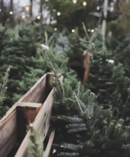 Ηλεκτροφόρο χέλι «φωταγωγεί» χριστουγεννιάτικο δέντρο σε ενυδρείο τουΤενεσί