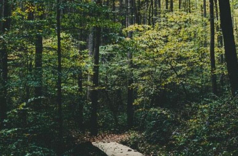 Η φύση εναντίον όλωνμας